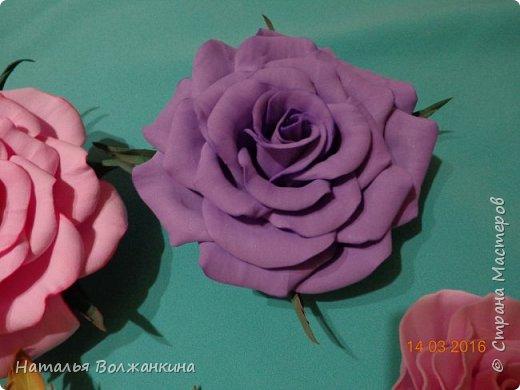 хоровод роз (общее фото) фото 4