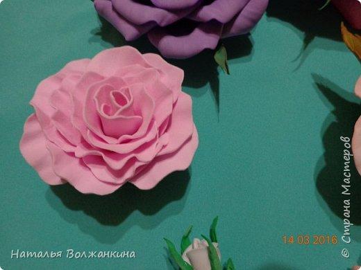 хоровод роз (общее фото) фото 6