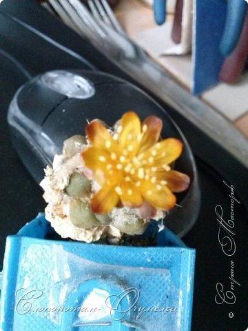 Привет стране! Вот и началось цветение моих зелёных ёжиков - кактусов. К сожалению, два предыдущих случая, когда появлялись бутоны, цветением не закончились - бутоны просто увядали, так и не раскрывшись. Но теперь другое дело. Первым начал цвести кактус Mammillaria microhelia, уже три цветка я успел сфотографировать (в течении пяти предыдущих дней). фото 13