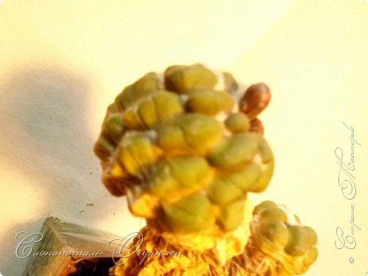 Привет стране! Вот и началось цветение моих зелёных ёжиков - кактусов. К сожалению, два предыдущих случая, когда появлялись бутоны, цветением не закончились - бутоны просто увядали, так и не раскрывшись. Но теперь другое дело. Первым начал цвести кактус Mammillaria microhelia, уже три цветка я успел сфотографировать (в течении пяти предыдущих дней). фото 10