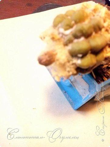 Привет стране! Вот и началось цветение моих зелёных ёжиков - кактусов. К сожалению, два предыдущих случая, когда появлялись бутоны, цветением не закончились - бутоны просто увядали, так и не раскрывшись. Но теперь другое дело. Первым начал цвести кактус Mammillaria microhelia, уже три цветка я успел сфотографировать (в течении пяти предыдущих дней). фото 11