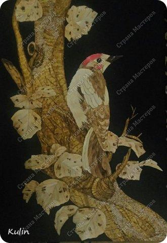 Дятел- Пророческая птица, символ магической силы, страж королей и деревьев.  Это символ активизации аналитического мышления. У дятла крепкий заостренный клюв и утяжеленный череп, что облегчает долбление. Острый клюв и длинный тонкий язык дятла соотносятся с такими качествами, как проницательность и разборчивость.  фото 1