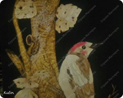 Дятел- Пророческая птица, символ магической силы, страж королей и деревьев.  Это символ активизации аналитического мышления. У дятла крепкий заостренный клюв и утяжеленный череп, что облегчает долбление. Острый клюв и длинный тонкий язык дятла соотносятся с такими качествами, как проницательность и разборчивость.  фото 2