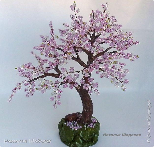 Японцы всегда с нетерпением ждут когда расцветёт сакура. Это прекрасное дерево которое радует своей красотой. Цветение сакуры в Японии - это целое событие, за которым следят все жители этой страны.  фото 2