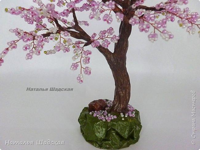 Японцы всегда с нетерпением ждут когда расцветёт сакура. Это прекрасное дерево которое радует своей красотой. Цветение сакуры в Японии - это целое событие, за которым следят все жители этой страны.  фото 3