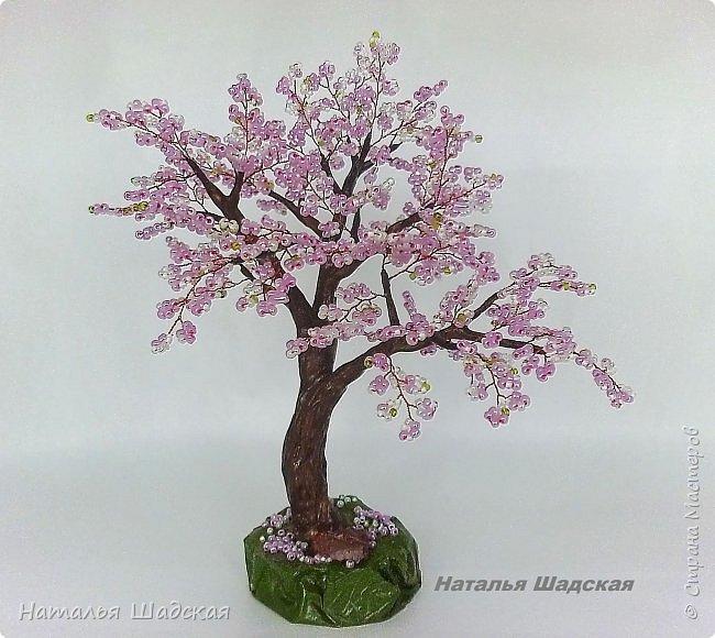 Японцы всегда с нетерпением ждут когда расцветёт сакура. Это прекрасное дерево которое радует своей красотой. Цветение сакуры в Японии - это целое событие, за которым следят все жители этой страны.  фото 1