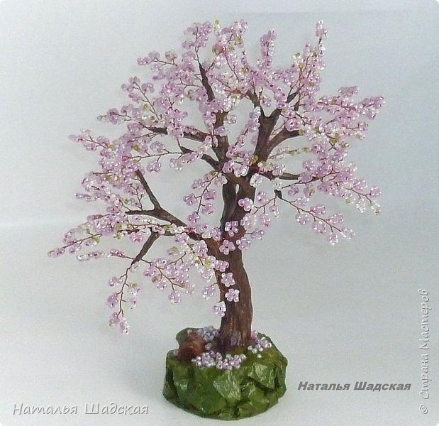 Японцы всегда с нетерпением ждут когда расцветёт сакура. Это прекрасное дерево которое радует своей красотой. Цветение сакуры в Японии - это целое событие, за которым следят все жители этой страны.  фото 4