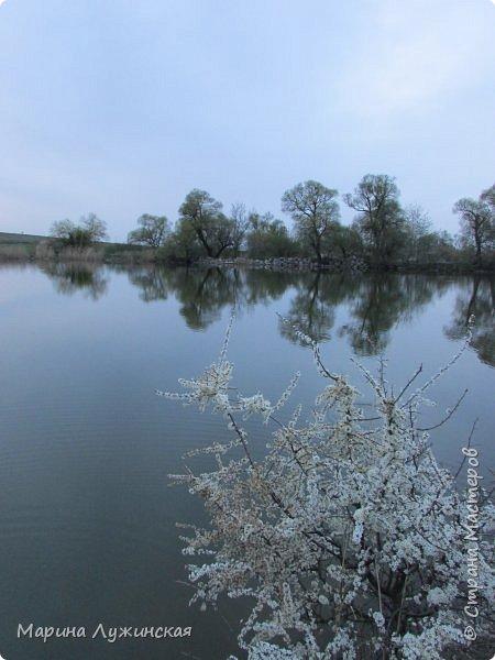Всем заглянувшим - тёплый, весенний привет! Очень хочеться поделиться с вами нашей весенней красотой и весенним настроением... Очень хочеться рассказать о наших весенних прогулках и находках.... фото 37