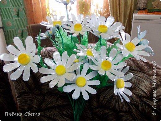 Ромашки в сад)