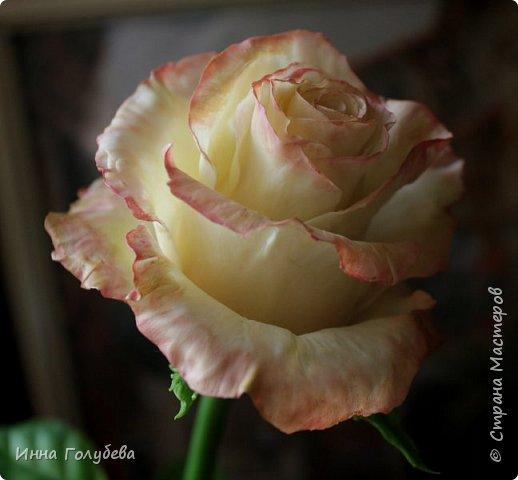 Продолжаю отрабатывать лепку роз.В этот раз вот такую слепила,такого цвета я еще розы не лепила) фото 1