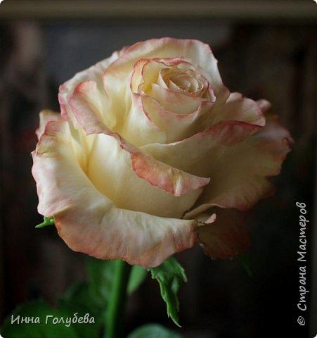 Продолжаю отрабатывать лепку роз.В этот раз вот такую слепила,такого цвета я еще розы не лепила) фото 5