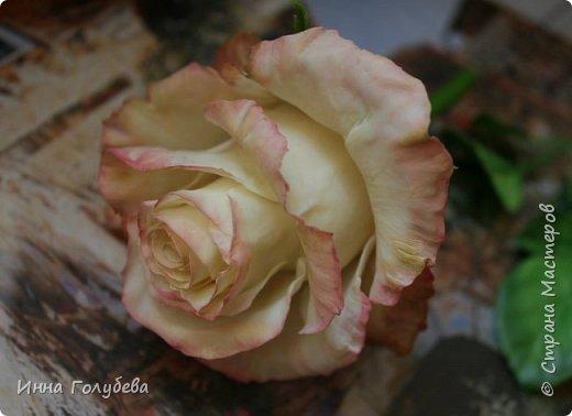 Продолжаю отрабатывать лепку роз.В этот раз вот такую слепила,такого цвета я еще розы не лепила) фото 11