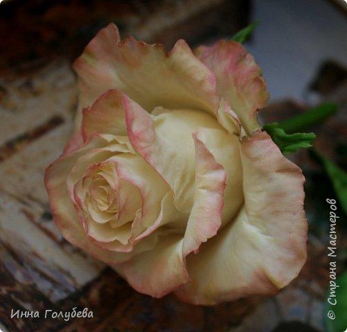Продолжаю отрабатывать лепку роз.В этот раз вот такую слепила,такого цвета я еще розы не лепила) фото 2