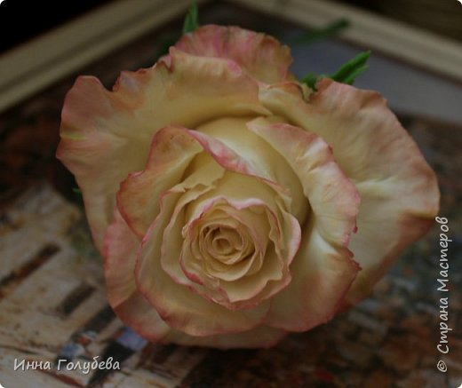Продолжаю отрабатывать лепку роз.В этот раз вот такую слепила,такого цвета я еще розы не лепила) фото 6
