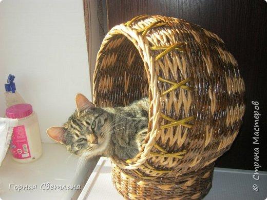 Мой котяра Моня,любитель поспать в плетенках. фото 1