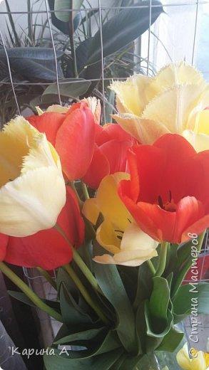 Здравствуйте! Сегодня мне исполнилась 15 лет! Ох, и забросали меня цветами! 50 штук! Это мое фото 1