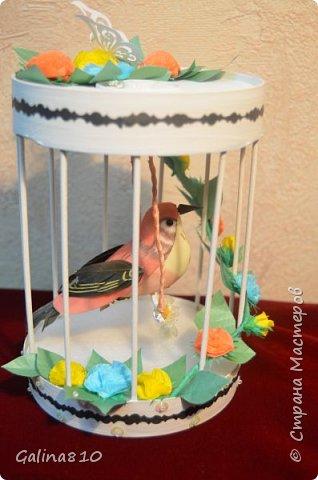 Птичка в клетке фото 1