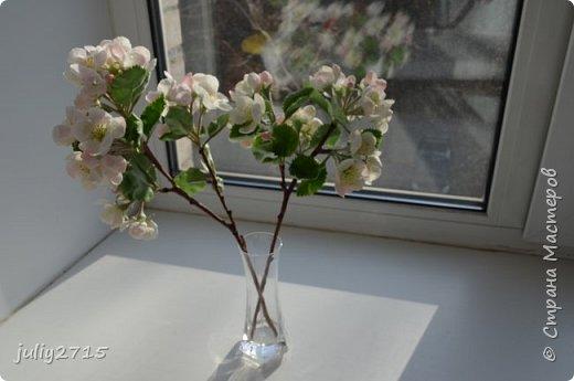 Ну вот и дождались весны и у меня зацвела яблонька. фото 2