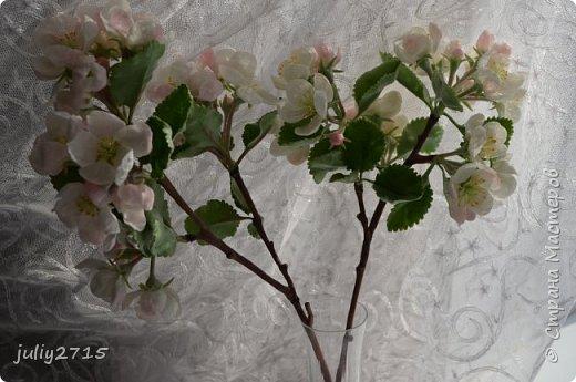 Ну вот и дождались весны и у меня зацвела яблонька. фото 3