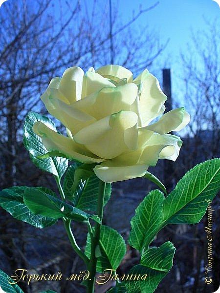 Доброго времени жители Страны Мастеров! Всё так же продолжаю учиться лепке цветов из полимерной глины. Что получается лучше, а что то не очень))  Роза примерно 45 см высота, диаметр цветка около 10 см. Не шедевр, но симпатичная) фото 3