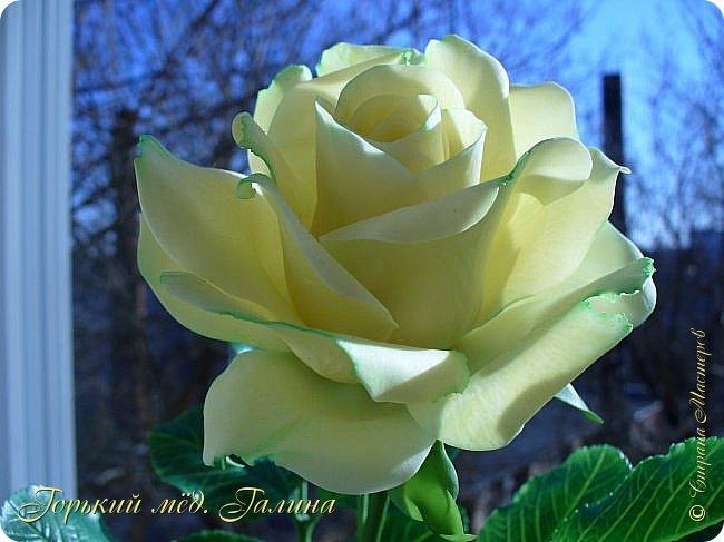 Доброго времени жители Страны Мастеров! Всё так же продолжаю учиться лепке цветов из полимерной глины. Что получается лучше, а что то не очень))  Роза примерно 45 см высота, диаметр цветка около 10 см. Не шедевр, но симпатичная) фото 4