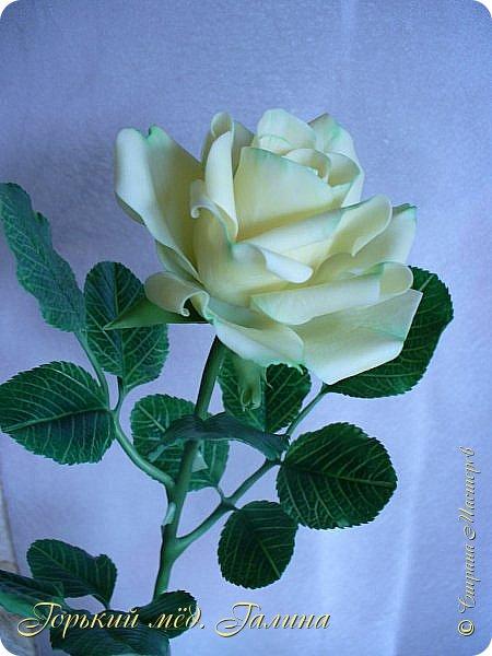 Доброго времени жители Страны Мастеров! Всё так же продолжаю учиться лепке цветов из полимерной глины. Что получается лучше, а что то не очень))  Роза примерно 45 см высота, диаметр цветка около 10 см. Не шедевр, но симпатичная) фото 7