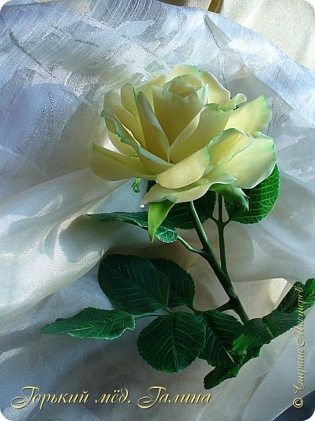 Доброго времени жители Страны Мастеров! Всё так же продолжаю учиться лепке цветов из полимерной глины. Что получается лучше, а что то не очень))  Роза примерно 45 см высота, диаметр цветка около 10 см. Не шедевр, но симпатичная) фото 2