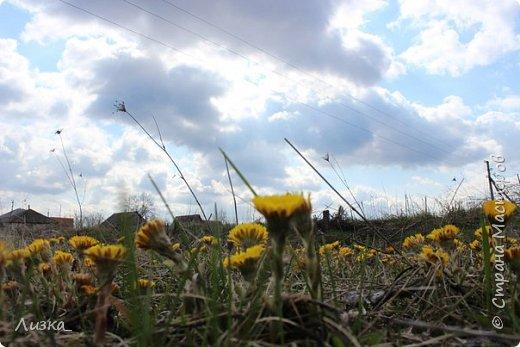 Всем привет!Это мой самый первый блог.Я хотела бы рассказать вам о природе моего родного края во время весны.Природа как бы просыпается от зимней спячки, на деревьях появляются почки, начинают летать насекомые да и люди тоже просыпаются))) Вот такое хорошее время года-весна. P.S. да и я родилась весной)))) фото 3