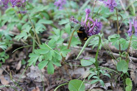 Всем привет!Это мой самый первый блог.Я хотела бы рассказать вам о природе моего родного края во время весны.Природа как бы просыпается от зимней спячки, на деревьях появляются почки, начинают летать насекомые да и люди тоже просыпаются))) Вот такое хорошее время года-весна. P.S. да и я родилась весной)))) фото 4
