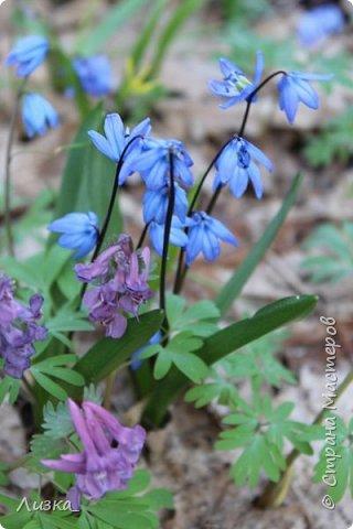 Всем привет!Это мой самый первый блог.Я хотела бы рассказать вам о природе моего родного края во время весны.Природа как бы просыпается от зимней спячки, на деревьях появляются почки, начинают летать насекомые да и люди тоже просыпаются))) Вот такое хорошее время года-весна. P.S. да и я родилась весной)))) фото 6