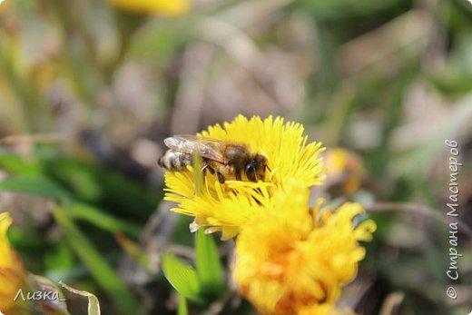 Всем привет!Это мой самый первый блог.Я хотела бы рассказать вам о природе моего родного края во время весны.Природа как бы просыпается от зимней спячки, на деревьях появляются почки, начинают летать насекомые да и люди тоже просыпаются))) Вот такое хорошее время года-весна. P.S. да и я родилась весной)))) фото 7