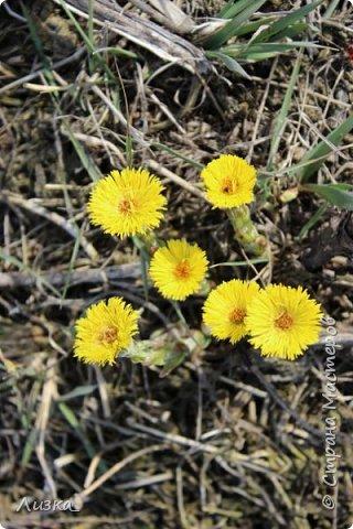 Всем привет!Это мой самый первый блог.Я хотела бы рассказать вам о природе моего родного края во время весны.Природа как бы просыпается от зимней спячки, на деревьях появляются почки, начинают летать насекомые да и люди тоже просыпаются))) Вот такое хорошее время года-весна. P.S. да и я родилась весной)))) фото 8