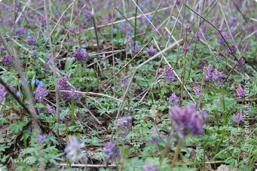 Всем привет!Это мой самый первый блог.Я хотела бы рассказать вам о природе моего родного края во время весны.Природа как бы просыпается от зимней спячки, на деревьях появляются почки, начинают летать насекомые да и люди тоже просыпаются))) Вот такое хорошее время года-весна. P.S. да и я родилась весной)))) фото 9