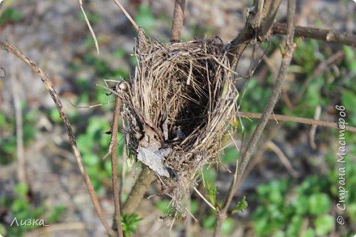 Всем привет!Это мой самый первый блог.Я хотела бы рассказать вам о природе моего родного края во время весны.Природа как бы просыпается от зимней спячки, на деревьях появляются почки, начинают летать насекомые да и люди тоже просыпаются))) Вот такое хорошее время года-весна. P.S. да и я родилась весной)))) фото 12
