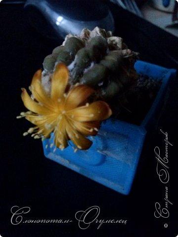Добрый день мастерам, мастерицам и гостям сайта! Продолжаю репортаж о цветении моих любимых кактусов. Начало репортажа здесь - http://stranamasterov.ru/node/1019329. В первом репортаже я показал начало цветения кактуса Cintia knizei. Это произошло 9 апреля. Кактус продолжал раскрывать цветок ещё три дня. Это снимок от 10 апреля. фото 1