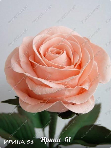 """Приветствую всех жителей Страны Мастеров. Сегодня я к  Вам с очередной порцией цветов из фома.  Без лишних слов приглашаю к просмотру.  Роза  """"Peach Avalanche"""" (Пич Аваланж) фото 14"""