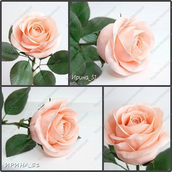 """Приветствую всех жителей Страны Мастеров. Сегодня я к  Вам с очередной порцией цветов из фома.  Без лишних слов приглашаю к просмотру.  Роза  """"Peach Avalanche"""" (Пич Аваланж) фото 12"""