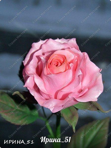 """Приветствую всех жителей Страны Мастеров. Сегодня я к  Вам с очередной порцией цветов из фома.  Без лишних слов приглашаю к просмотру.  Роза  """"Peach Avalanche"""" (Пич Аваланж) фото 10"""
