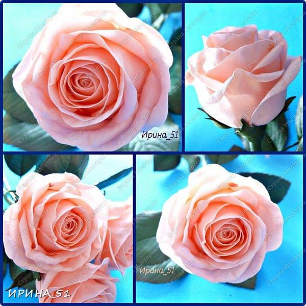 """Приветствую всех жителей Страны Мастеров. Сегодня я к  Вам с очередной порцией цветов из фома.  Без лишних слов приглашаю к просмотру.  Роза  """"Peach Avalanche"""" (Пич Аваланж) фото 1"""