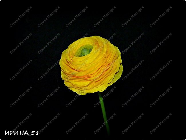 """Приветствую всех жителей Страны Мастеров. Сегодня я к  Вам с очередной порцией цветов из фома.  Без лишних слов приглашаю к просмотру.  Роза  """"Peach Avalanche"""" (Пич Аваланж) фото 6"""