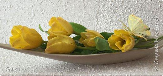Всем привет!  Баухиния,  она названа в честь швейцарских ботаников шестнадцатого века. Баухинию, кроме научного названия «Bauhinia», еще называют «орхидейное дерево» из-за схожести ее с орхидеей. Она чем-то похожа на бабочек. Наверно, такие ассоциации возникают из-за того, что ее листья складываются на ночь пополам вдоль центральной жилки. Такое еще происходит при сильном жаре или недостатке влаги. Так происходит спасение и от засухи. фото 10