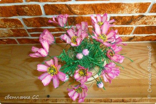 Расцвели цветочки в ночь сегодня фото 4