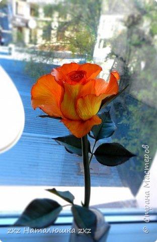 """Здравствуйте,дорогие Мастера и Мастерицы)!!Ох,как же давно я здесь не была...А за это время я,как и большинство)),успела """"заболеть"""" фоамираном))!!!И вот хочу показать вам свои розочки).Все розы сделаны из иранского фоамирана,тонировка масляной пастелью,стебли из полимерной глины,листья - фоамиран.Розочки делала по МК Александры Троицкой! фото 2"""