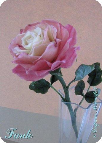 Давно не лепила розы, а тут вот дорвалась :-) . Один из моих любимых сортов роз. фото 7