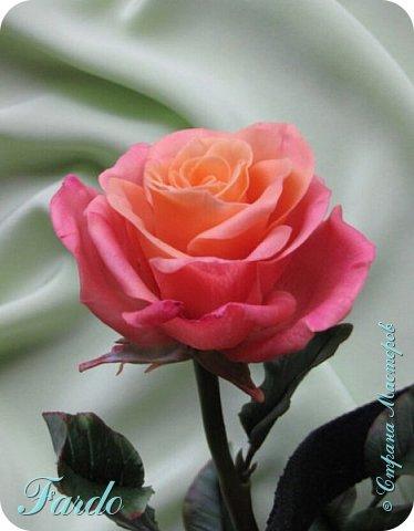 Давно не лепила розы, а тут вот дорвалась :-) . Один из моих любимых сортов роз. фото 1