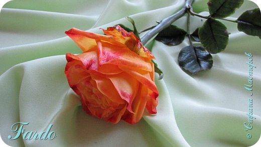 Давно не лепила розы, а тут вот дорвалась :-) . Один из моих любимых сортов роз. фото 4
