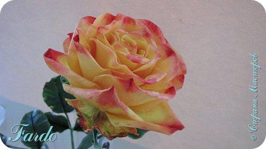 Давно не лепила розы, а тут вот дорвалась :-) . Один из моих любимых сортов роз. фото 5