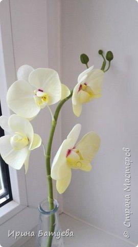 Несколько орхидей, в разных цветах фото 5