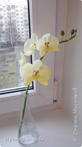 Несколько орхидей, в разных цветах фото 6