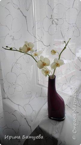 Несколько орхидей, в разных цветах фото 7